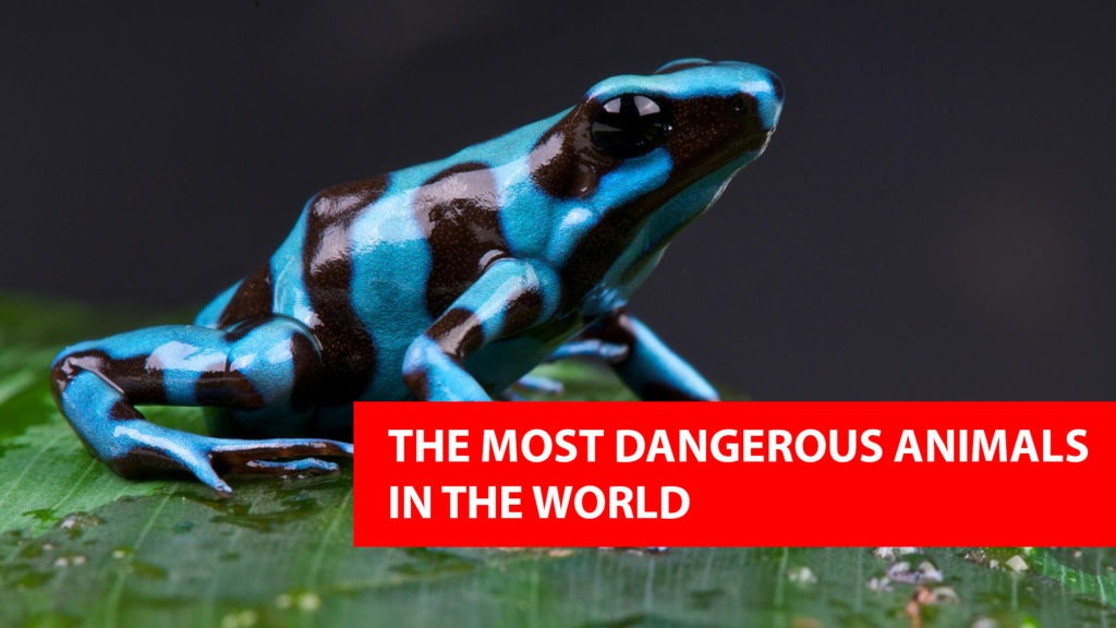 Top 10 Most Dangerous Animals You've Never Heard Of